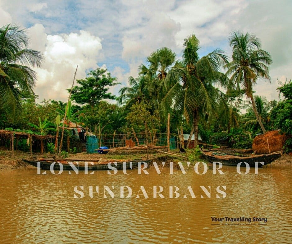 lone survival in sundarbans