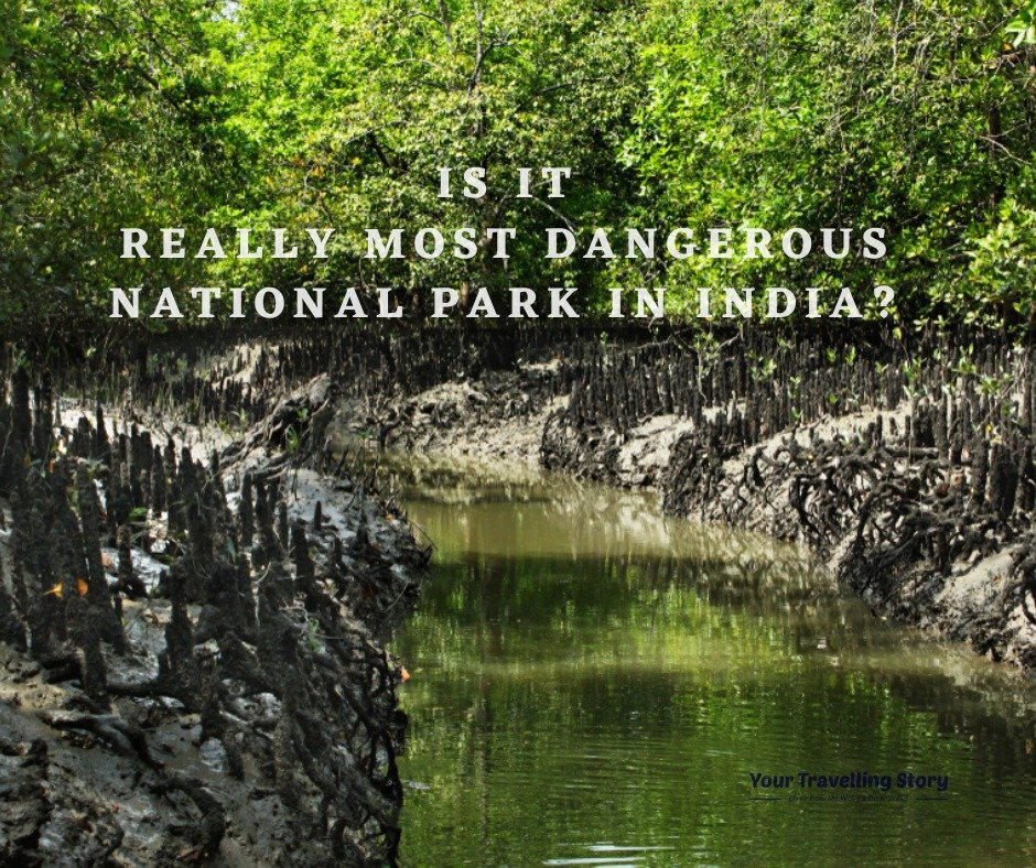Sundarbans the most dangerous national park in India