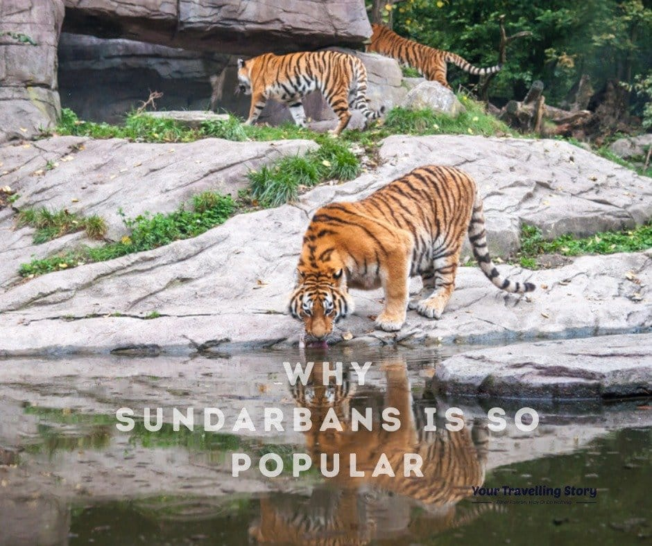 Sundarbans very famous across the world
